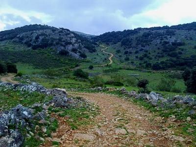 Camino pedregoso