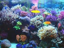 Bofetadas de agua zarandeando el coral